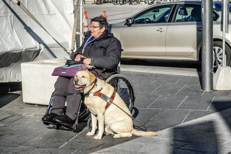 Собака Миры стоковое изображение