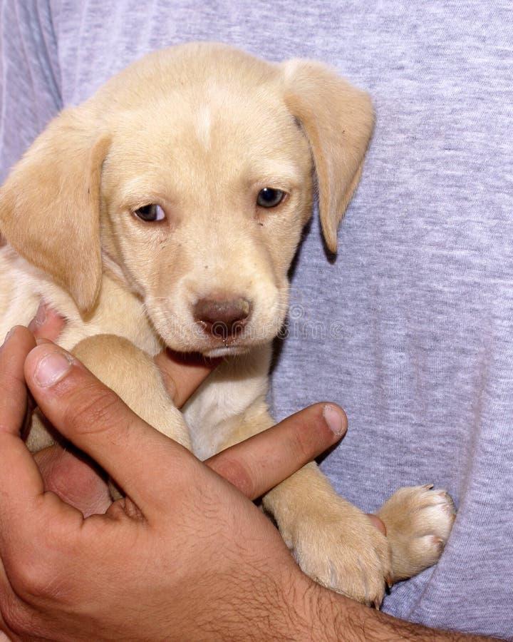 собака младенца стоковое изображение
