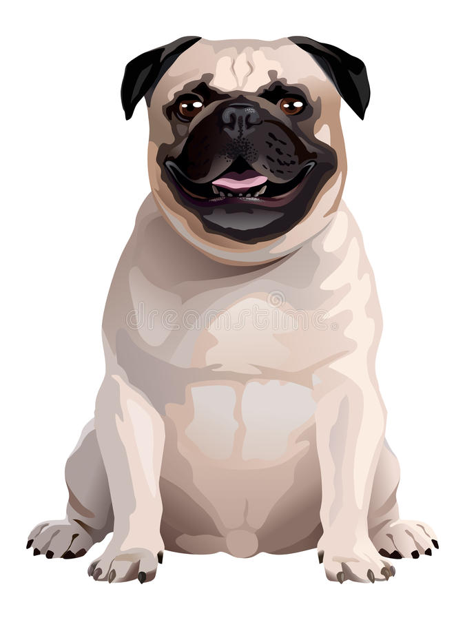 Собака Мопс иллюстрация штока