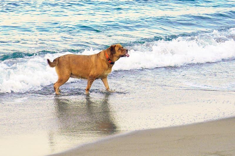 Собака морем стоковое фото rf