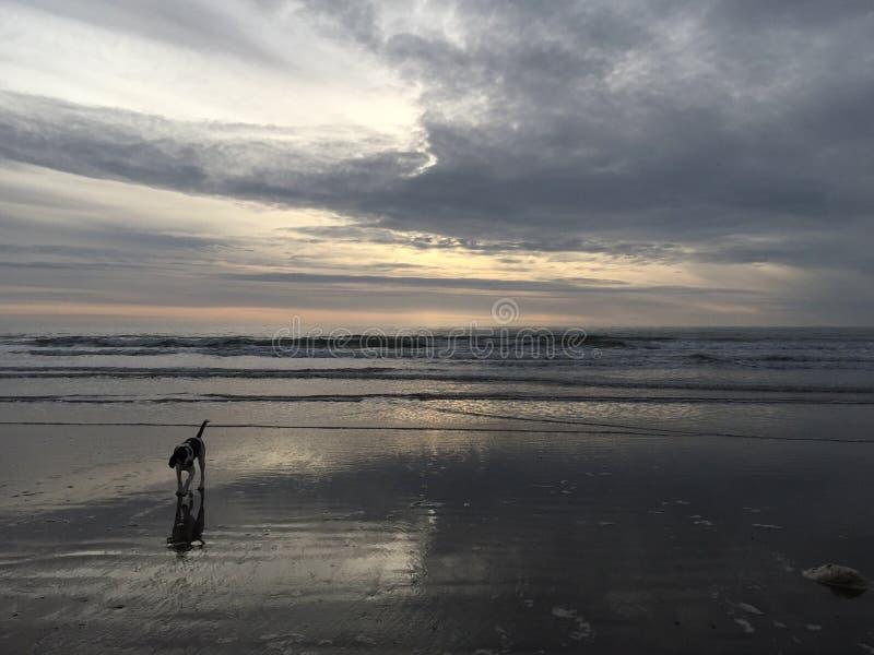 Собака моря стоковое фото rf