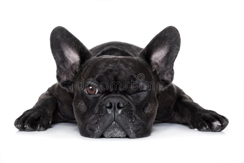 Собака наблюдая на вас стоковая фотография rf