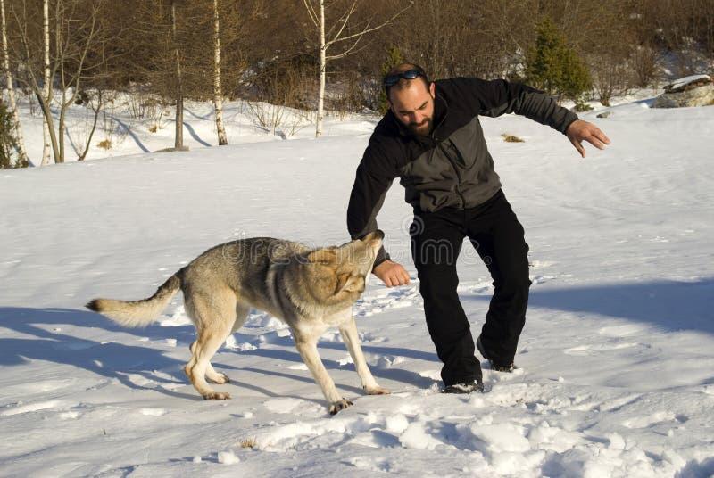 собака нападения стоковое фото