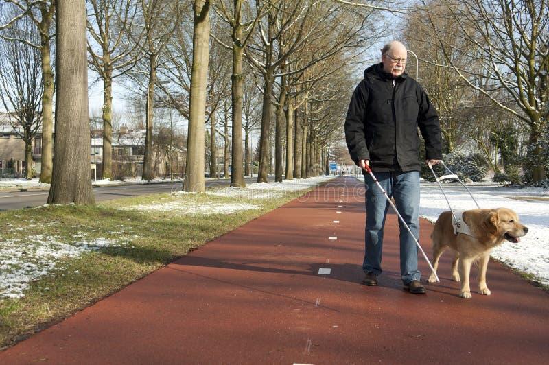 Собака направляющего выступа помогает слепому человеку стоковая фотография