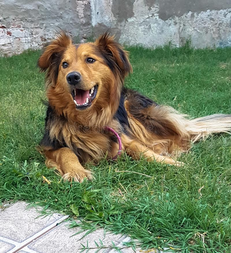 Собака наслаждаясь садом Счастье собаки стоковые фотографии rf