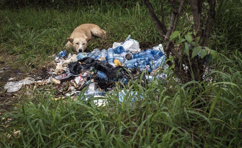 Собака на бутылках старья любимчика в Африке стоковое изображение
