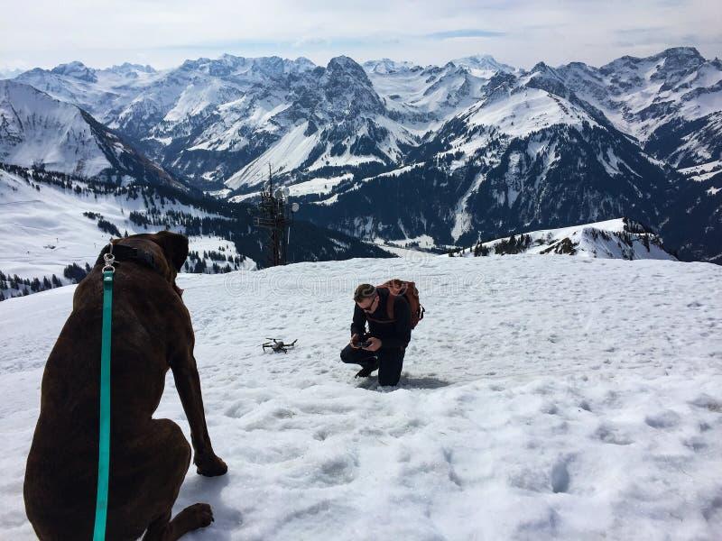 Собака на верхней части горы вытаращить на пилоте трутня стоковое фото