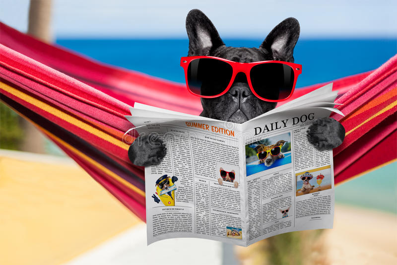 Собака на гамаке стоковые фотографии rf