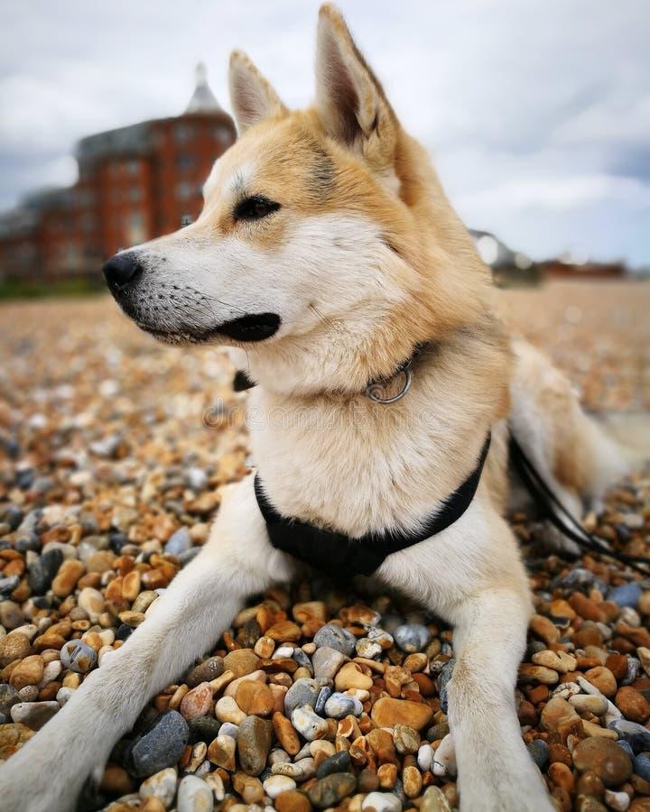 Собака на гонт стоковое изображение rf
