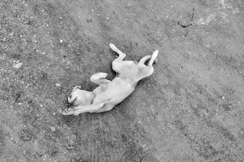 Собака на игре стоковые фото