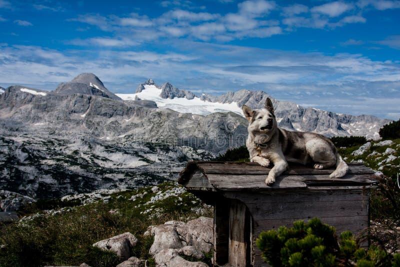 Собака на крыше стоковая фотография