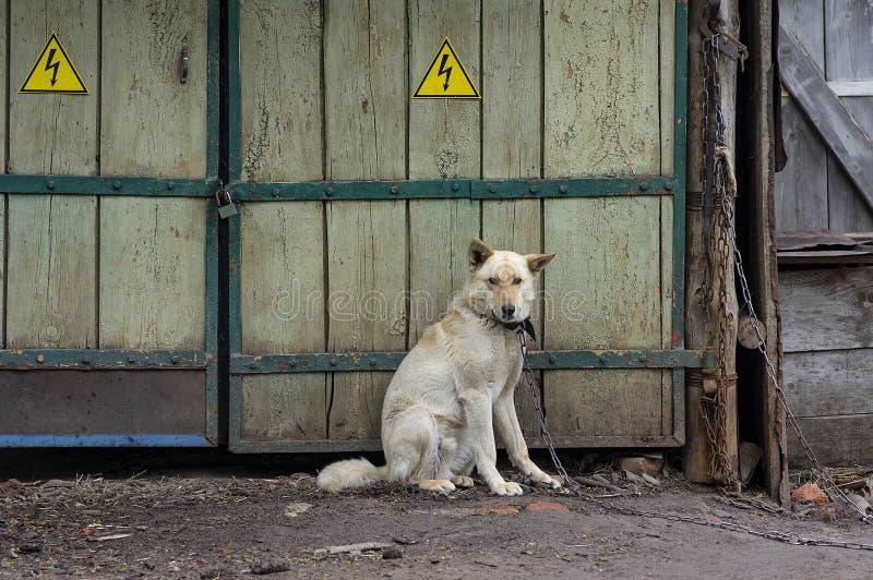 Собака на направляющих бугелях цепной передачи старые ворота стоковые фото