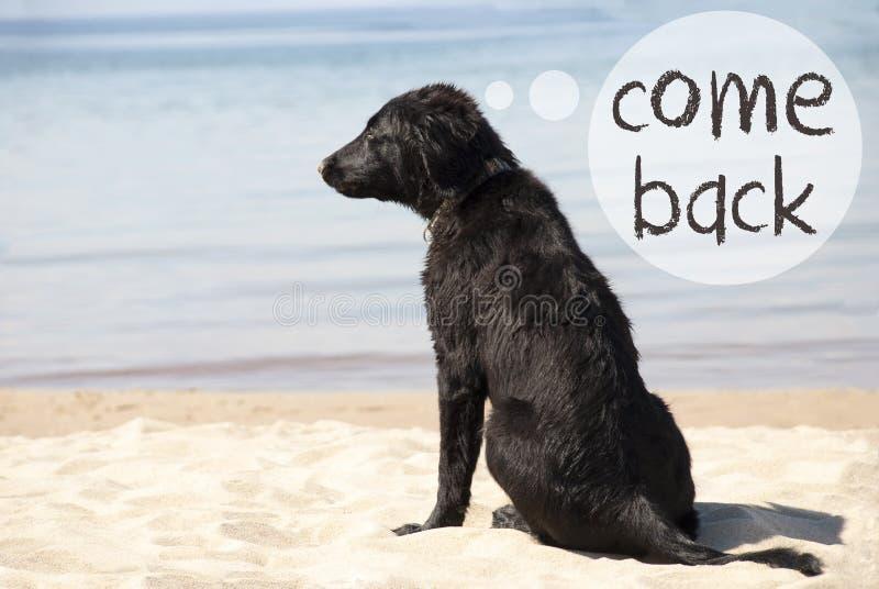 Собака на песчаном пляже, тексте приходит назад стоковое изображение