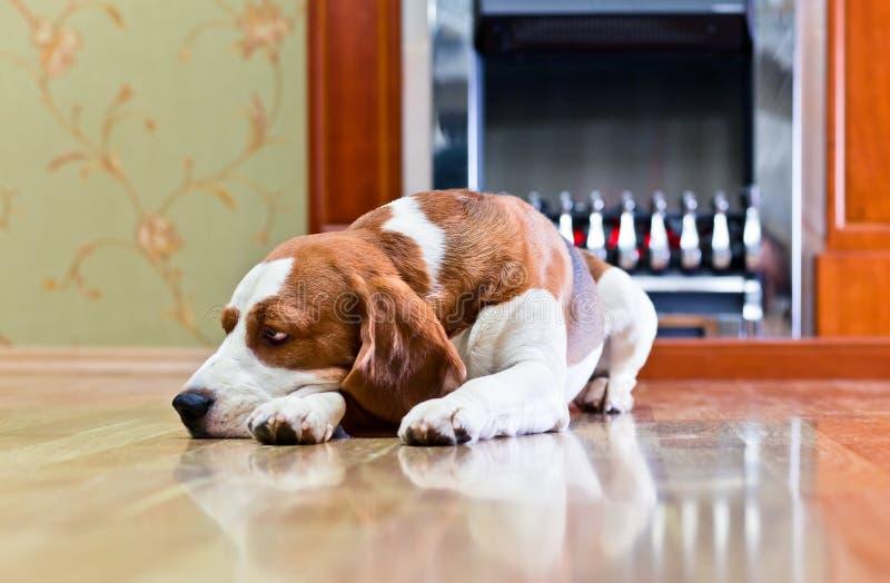 Собака на поле стоковые фотографии rf