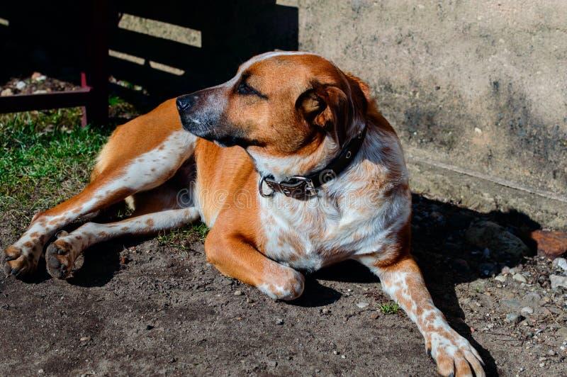 Собака на прогулке стоковые фото