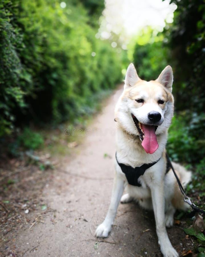 Собака на пути стоковые фото