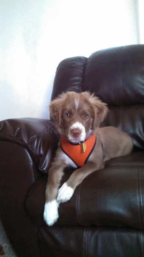 Собака на стуле стоковые изображения rf
