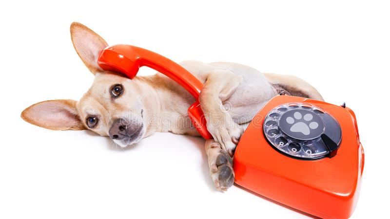 Собака на телефоне стоковая фотография