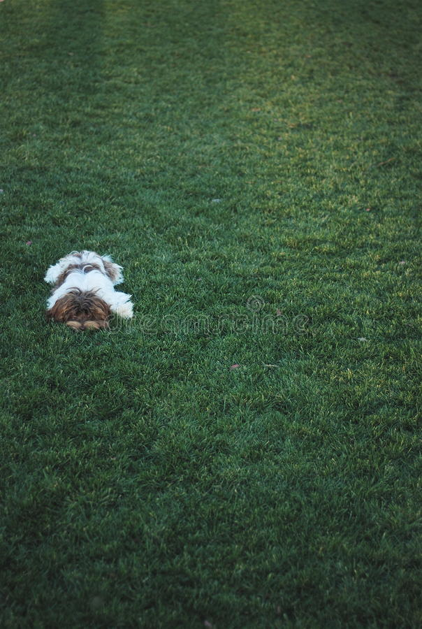 Собака на траве стоковое изображение