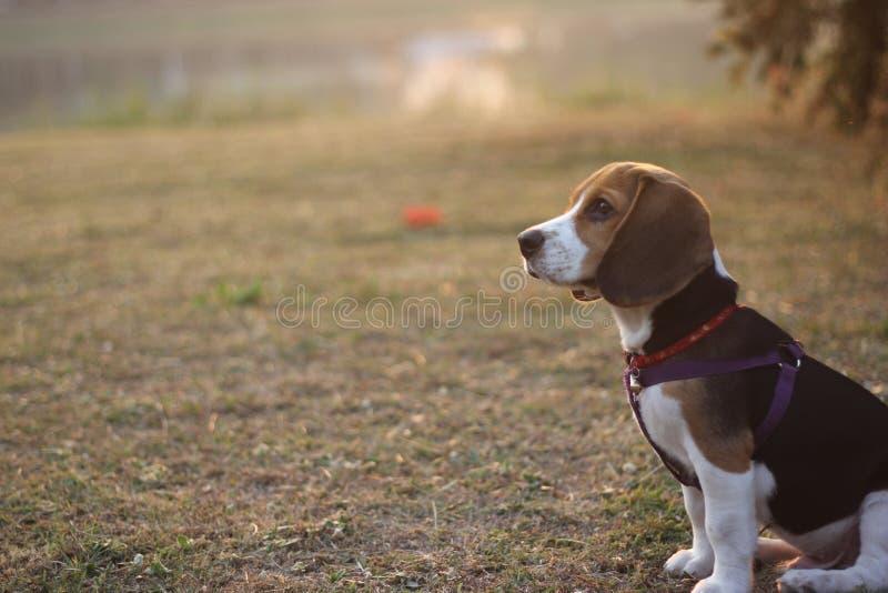 Собака на траве стоковые фото