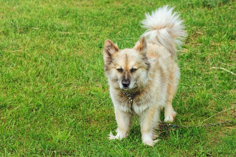 Собака на траве стоковое фото