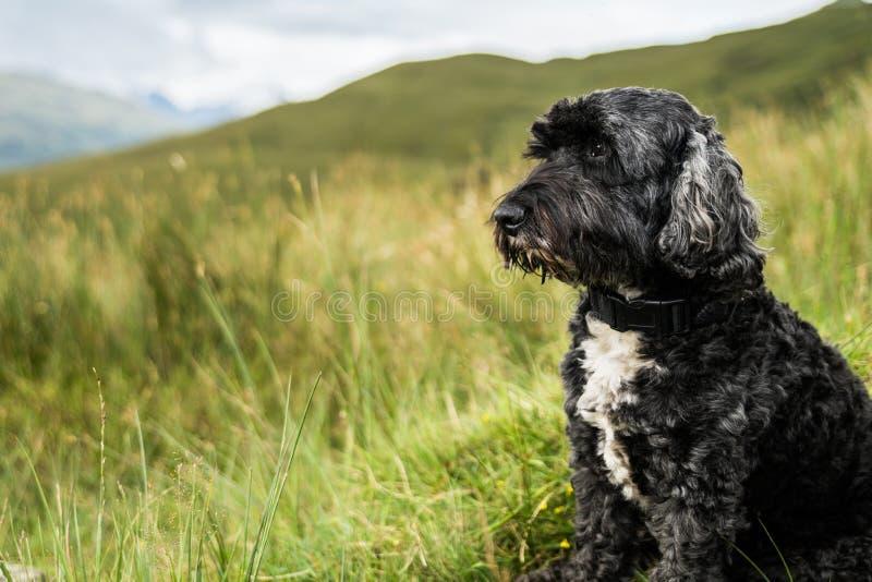 Собака на шотландской горе стоковые изображения