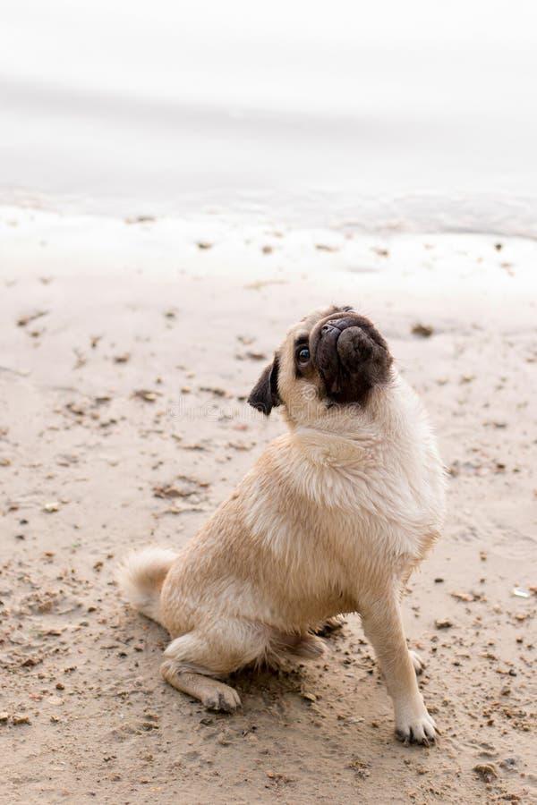 Собака на baech в солнечном дне стоковое изображение