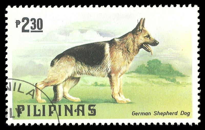 Собака, немецкая овчарка редакционное фото. изображение ...