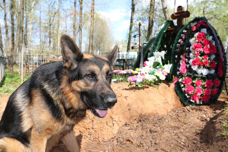 Собака немецкой овчарки около могилы стоковые изображения
