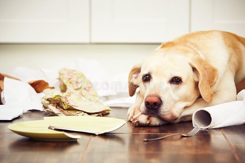 собака непослушная стоковая фотография
