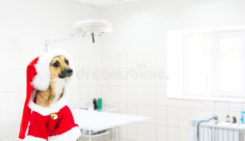 Собака одетьнная как Santa Claus стоковые фотографии rf