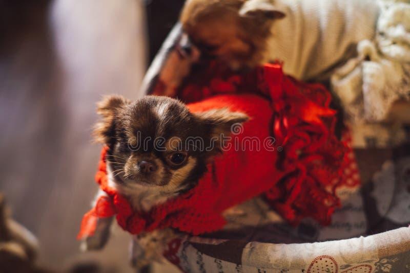 Собака ослабляет в его кровати стоковое фото