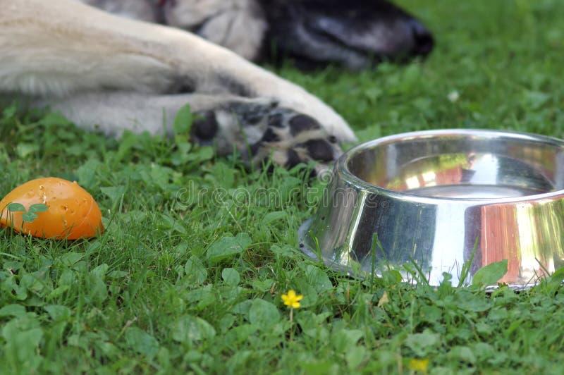 Собака ослабляя outdoors стоковое изображение