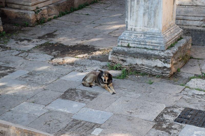 Собака отдыхает на ноге ворот  стоковое фото