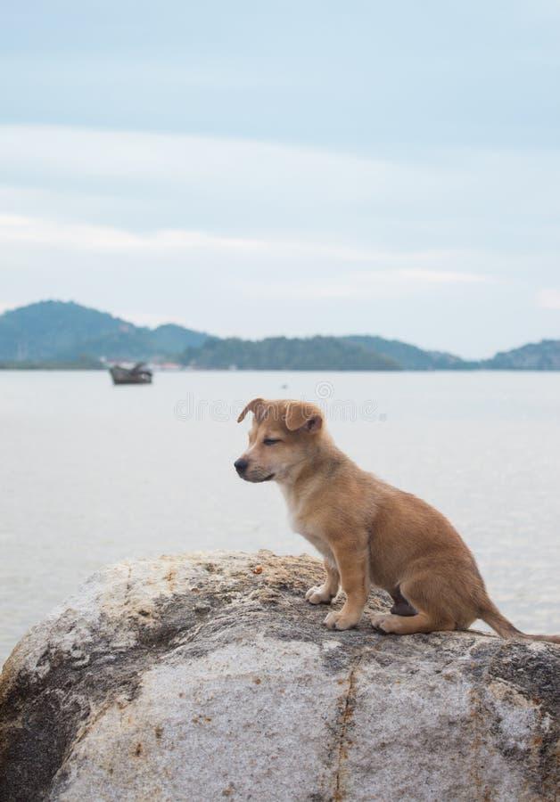 Собака одиночества сидит на пляже стоковые фотографии rf