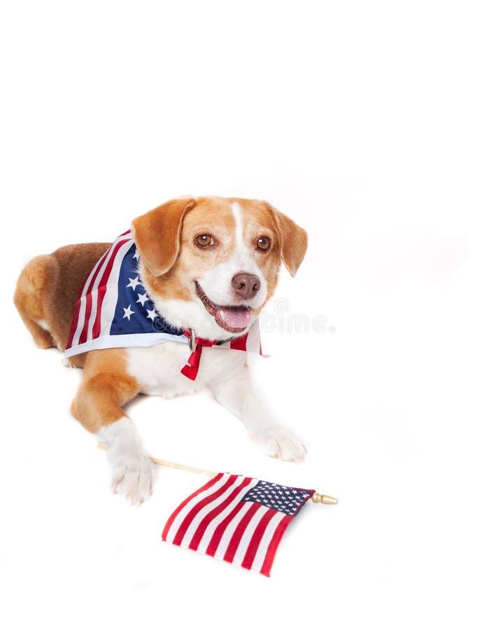 собака патриотическая стоковое изображение rf