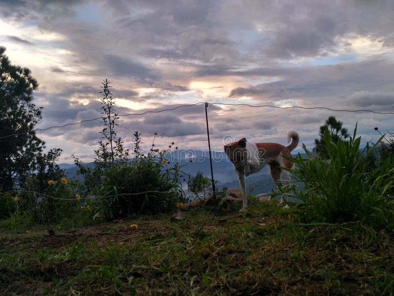Собака пересекая провод стоковое фото