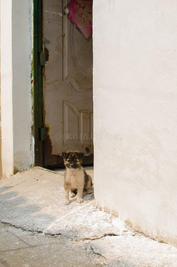 Собака переулка стоковые изображения