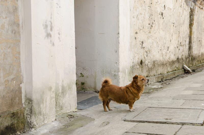 Собака переулка стоковые фото