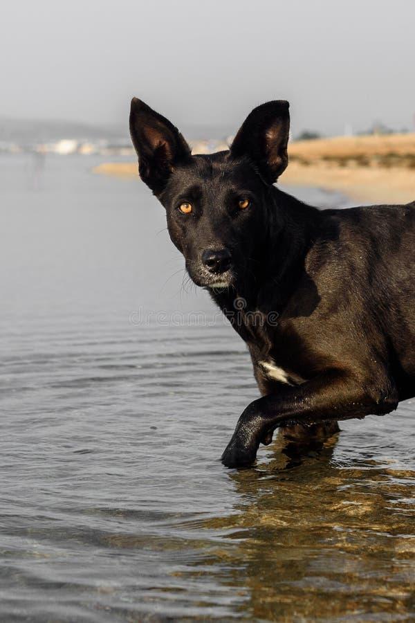 Собака плавает в море стоковое фото