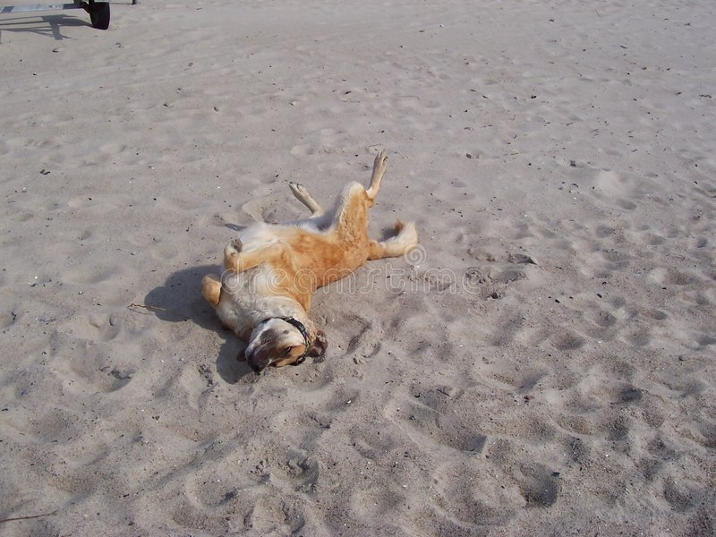 собака пляжа счастливая стоковое изображение rf