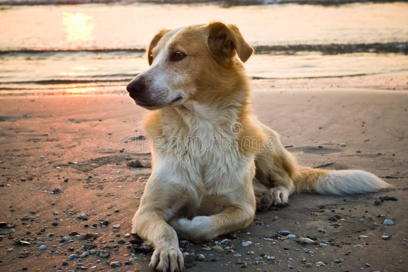 собака пляжа стоковое изображение rf