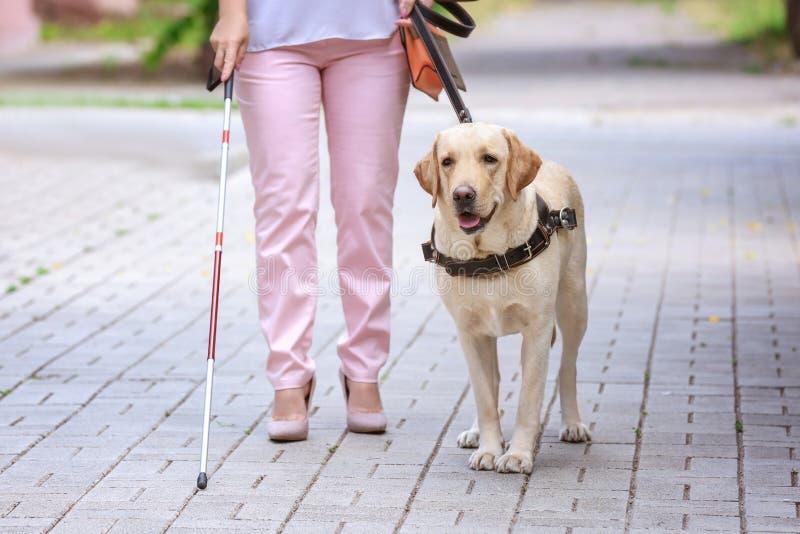 Собака-поводырь помогая слепой женщине стоковое изображение