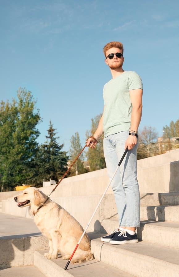 Собака-поводырь помогая слепому человеку с длинной тросточкой идя вниз с лестниц стоковая фотография rf
