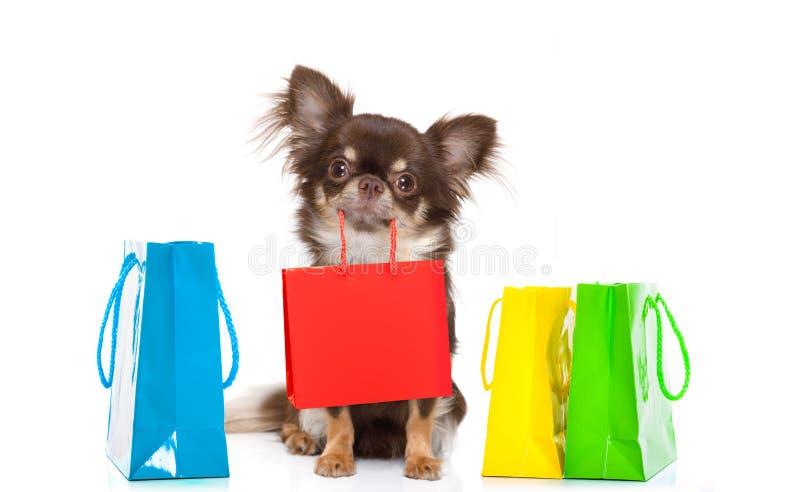 Собака покупок с сумкой стоковые изображения rf