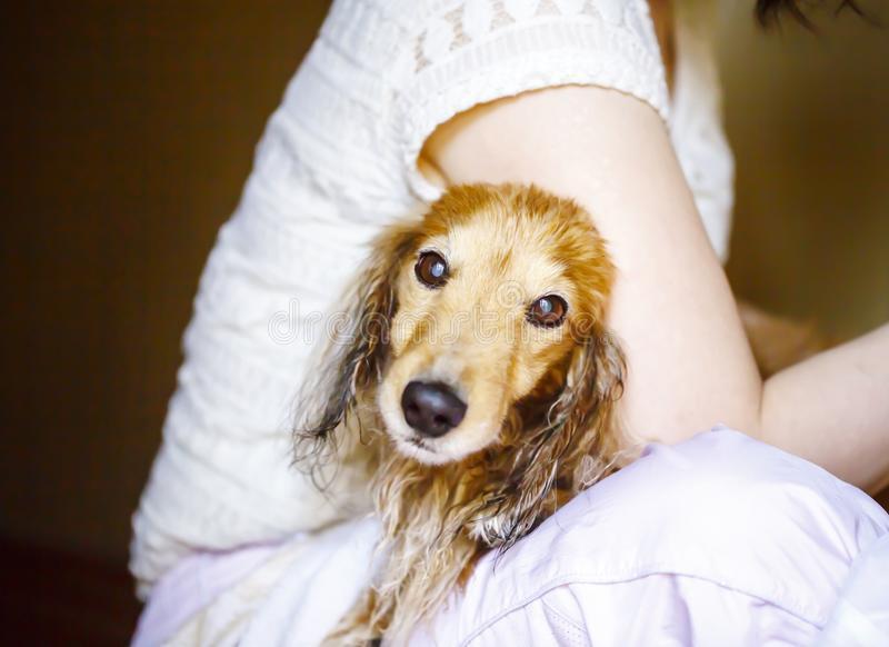 Собака получая его мех высушила с воздуходувкой на groomer стоковое фото