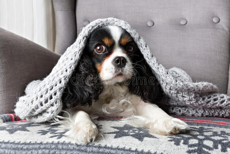 Собака под одеялом стоковые фото