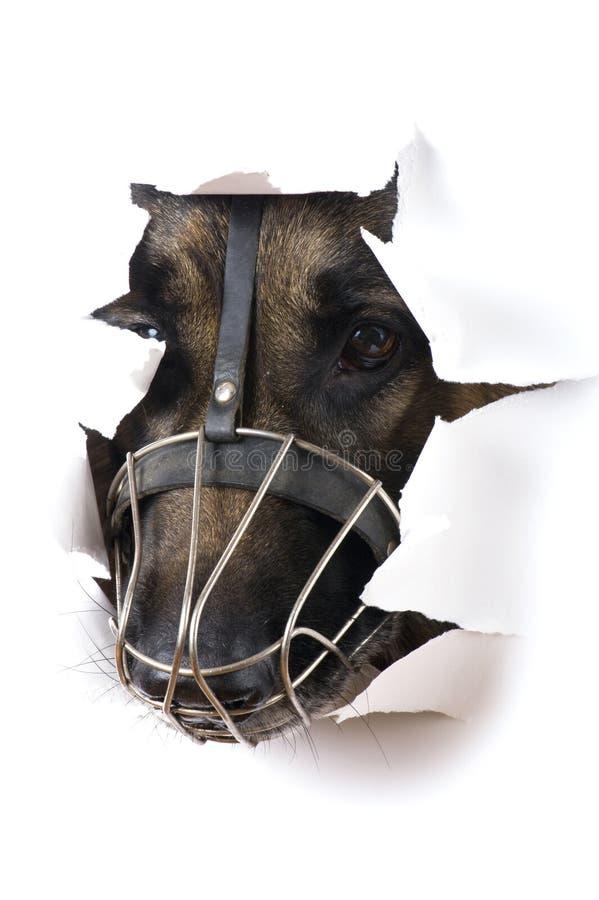 собака предпосылки близкая вверх по белизне стоковая фотография