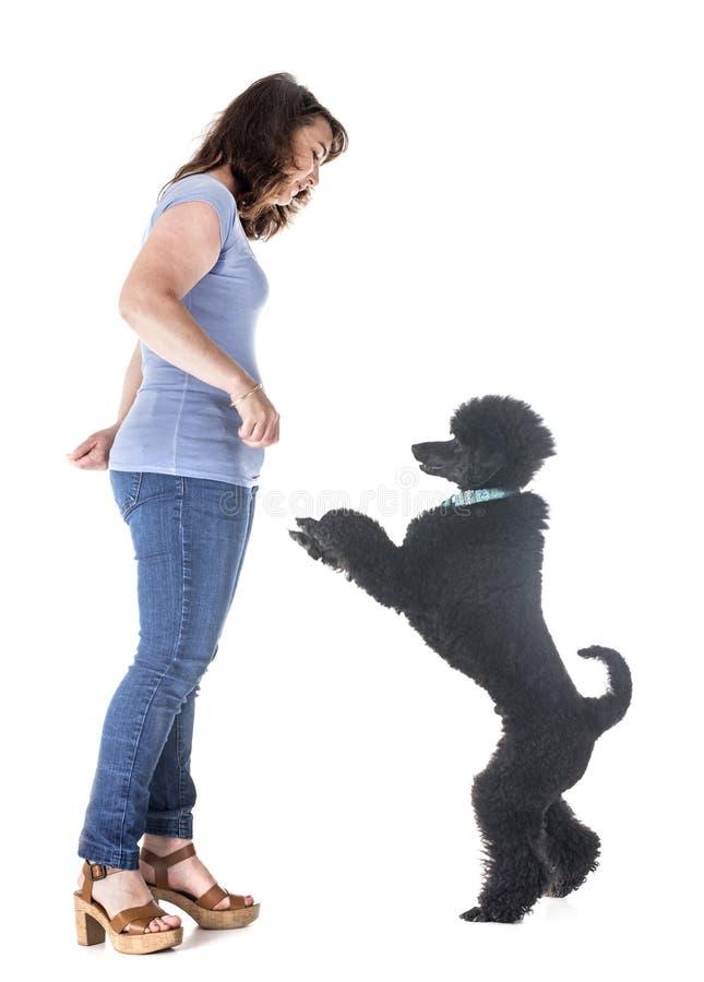 Собака, предприниматель и повиновение стоковая фотография