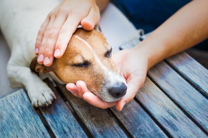 Собака предпринимателя petting стоковая фотография